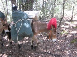 トレッキングの荷物を運ぶロバ