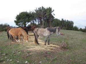 馬が身近に感じられた旅だった
