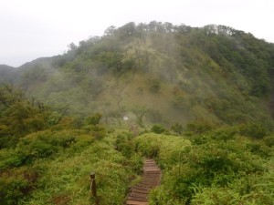 丹沢山に続く稜線は快適。